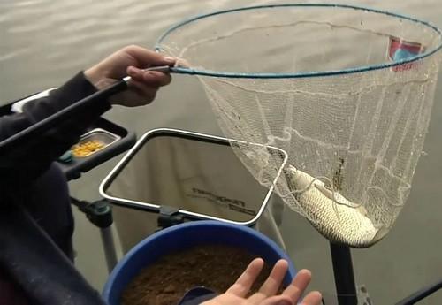 Как поймать амура весной