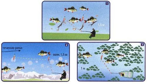 Ловля окуня на живца в реке