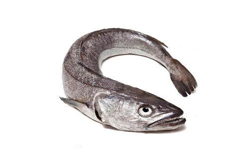Мерлуза (хек) рыба (Merluccius)