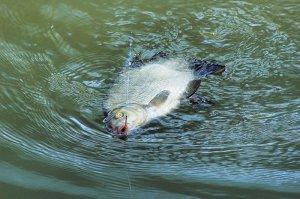Рыбалка леща