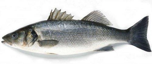 Лаврак (Dicentrarchus labrax)