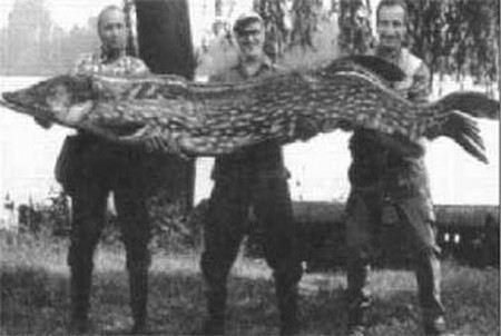 Самая большая щука в мире