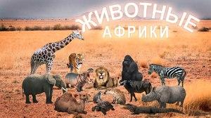 Африка и её животный мир: африканские животные
