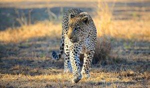 Хищные животные Африки