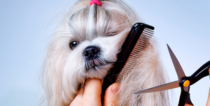Советы по стрижке собак