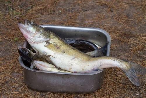 Особенности весенней ловли судака спиннингом с лодки и с берега