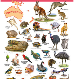 Какие животные живут в Северной Америки
