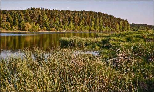 Где ловить карася в августе