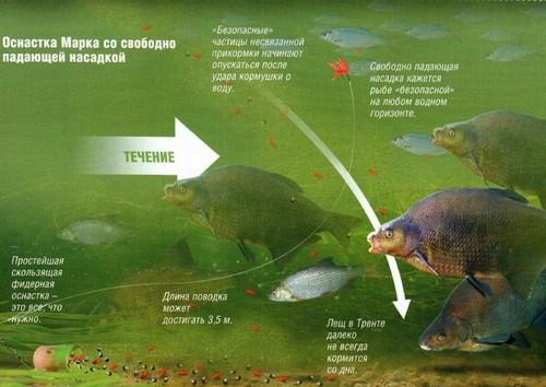 Подводная схема нахождения леща у прикормки