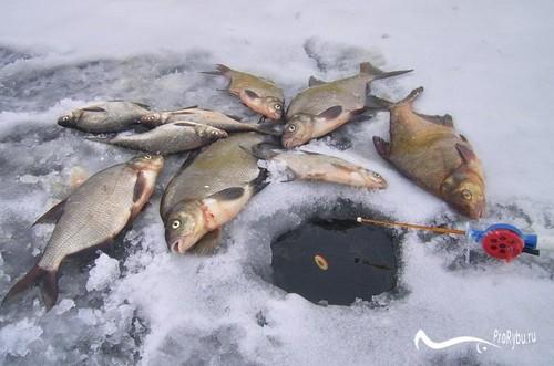 Рыбалка Лещ на льду