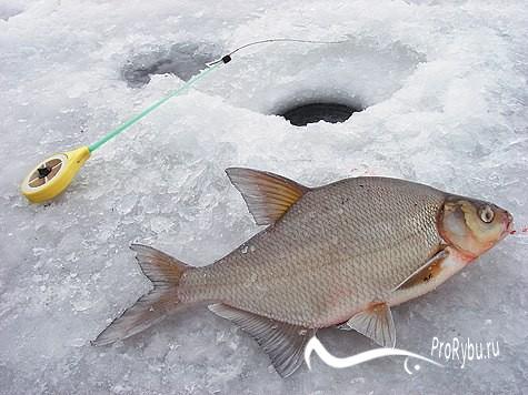 Рыбалка зимой в палатке