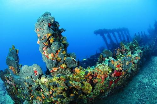 Лучшие места для дайвинга - затонувший корабль Рона вблизи острова Солт