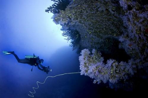 Лучшие места для дайвинга - Тавеуни, Фиджи