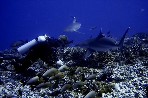 Лучшие места для дайвинга - Типута Пасс, Французская Полинезия