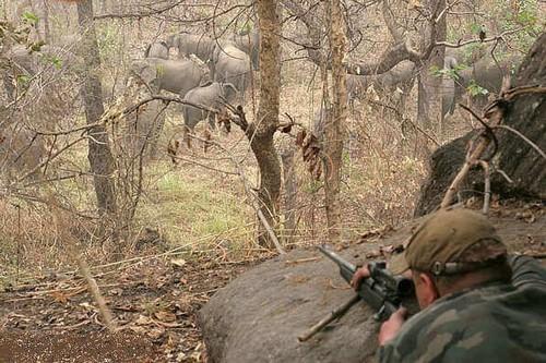 Охота на слонов случай на охоте