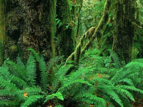 Охота в тропических лесах