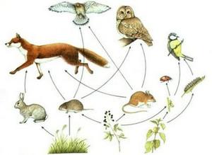 Как питаются животные в лесу