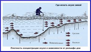 Поиск рыбы зимой на водохранилищах и больших водоемах
