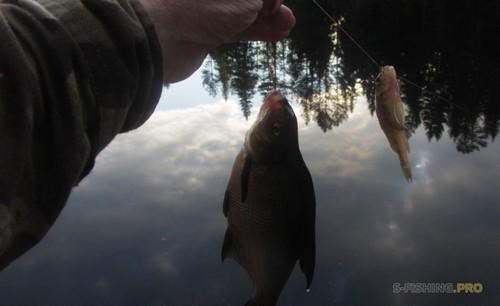 Отчеты с водоемов: Река Шуя в Карелии.