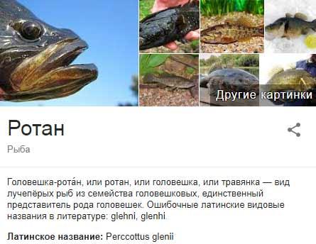 Рыба ротан фото и описание