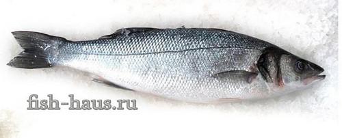 Рыба сибас фото и описание