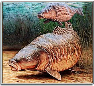 Рыбалка на сазан (карпа) чем и на что ловить рыбу