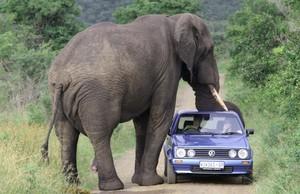 Слоны - миролюбивые животные