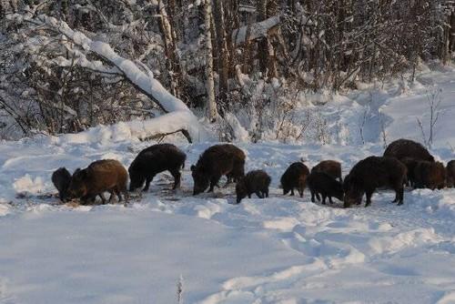 Учет охотничьих животных