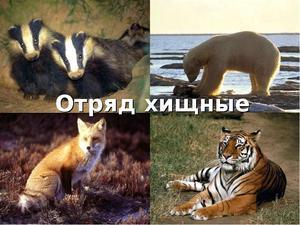 Хищные млекопитающие животные: описание и виды