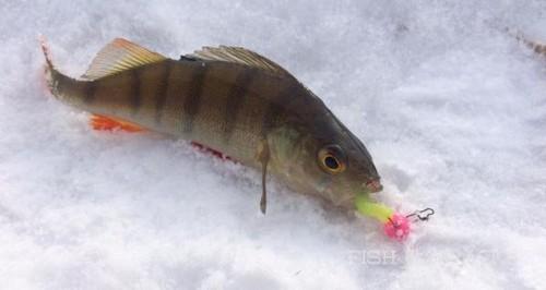 Холод рыбалке не помеха