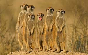 Животные пустыни-описание
