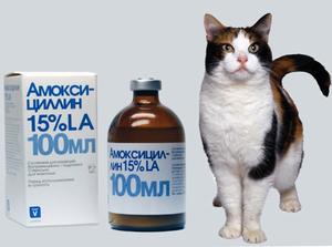 Амоксициллин для кошек суспензия