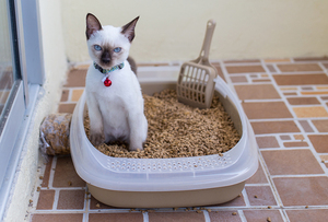 Открытый кошачий туалет