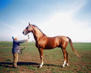 Конь на пастбище