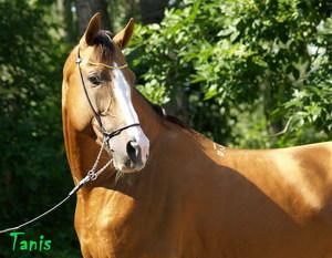 Содержание буденновских лошадей