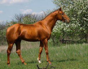 Лошадь возле сада