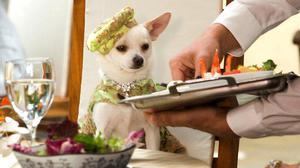 Питание собаки чихуахуа