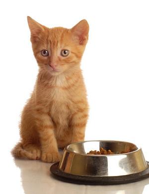 Питание маленьких котят