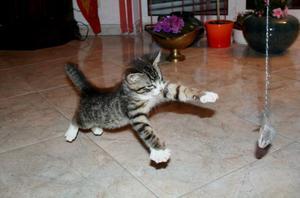 Как кормить котят в два месяца