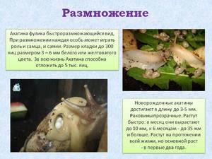 Чем можно кормить улиток