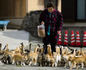 Культ кошек в Японии