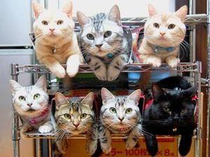 Почему линяют коты