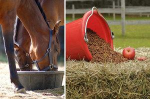 Какие есть корма для лошадей