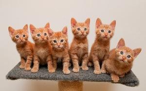 Заболевания кошек