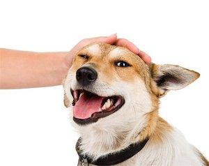 Поощрение собаки
