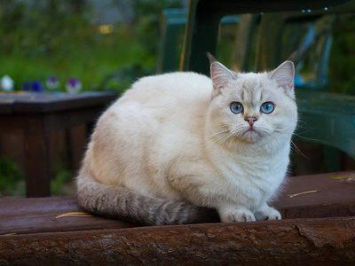 До какого возраста растут кошки и коты?