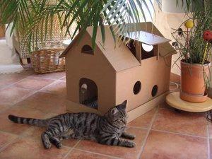 Как построить домик для кошек