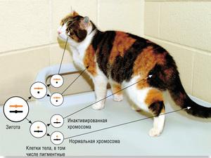 38 хромосом у кошек