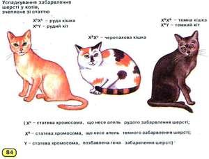Сколько хромосом у кошек