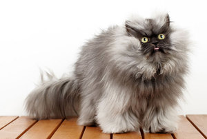 Кратко о кошках
